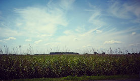 Green field and trees Royalty Free Stock Images