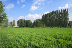 Green Field, Trees Lines And Blue Sky Stock Images