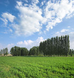 Green Field, Trees Lines And Blue Sky Stock Photography