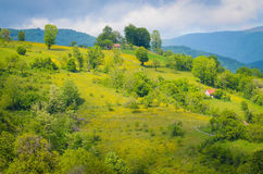 Green field with trees stock photo