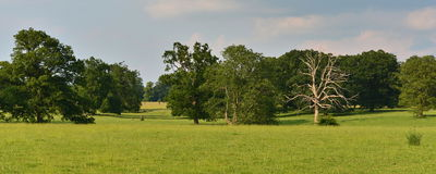 Green Field and Trees. Panoramic Summertime Landscape View of a Green Field and Trees Royalty Free Stock Images