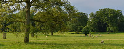 Green Field and Trees. Panoramic Summertime Landscape View of a Green Field and Trees Stock Images