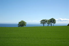 Green field and trees by sea Royalty Free Stock Image
