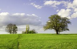 Green field with trees and sky Royalty Free Stock Photos