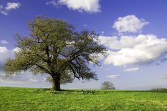 Green field with trees and sky Stock Images
