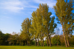 Green field and trees. Stock Photo