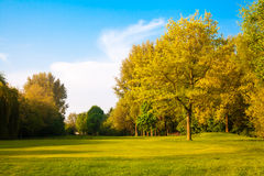 Green field and trees.  Summer Stock Photos