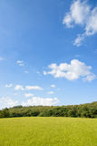 Green field with trees Royalty Free Stock Image