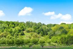 Green field and trees in a sunny summer day with blue bright sky and white clouds stock photos