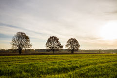 Green field with trees. Green field with three trees in autumn Stock Photo
