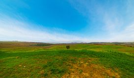 Green field in Tuscany Stock Image