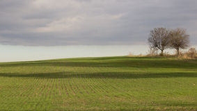Green field with two lone trees Stock Photography