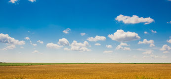 Green field under beautiful dark blue sky Royalty Free Stock Photo