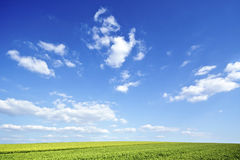 Green field under big sky Stock Images