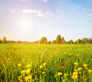 Green field under blue cloudy sky with sun Royalty Free Stock Image