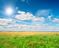 Green field under blue cloudy sky whit sun. This is Green field under blue cloudy sky whit sun Royalty Free Stock Photography
