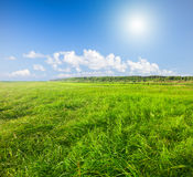 Green field under blue cloudy sky whit sun. This is Green field under blue cloudy sky whit sun Stock Photos