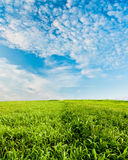 Green field under blue skies Royalty Free Stock Photo