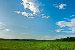 Green field under blue skies Stock Image
