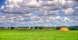 Green field under the blue sky Stock Photography