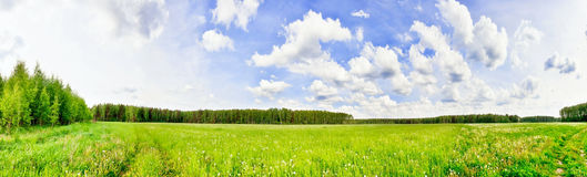 Green field under blue sky Stock Images