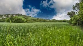 Green field under blue sky Stock Image