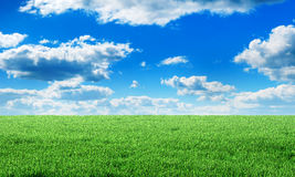Green field under blue sky with clouds. Stock Images