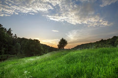Green field under a blue sky with clouds. Spring evening landscape. Green field under a blue sky with clouds Stock Image