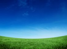 Green field under blue sky. With copy space Royalty Free Stock Photography