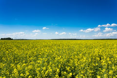 Green field under blue sky Royalty Free Stock Image
