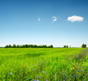 Green field under the blue sky. Summer landscape Royalty Free Stock Images