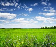 Green field under the blue sky. Summer landscape Stock Photography