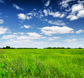 Green field under the blue sky. Summer landscape Stock Photos