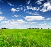 Green field under the blue sky. Summer landscape Stock Photos