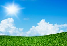 Green field under blue sky and sun.  Stock Photo