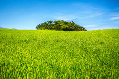 Green field under blue sky Stock Image