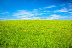 Green field under blue sky Royalty Free Stock Photography