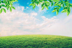 Green field under blue sky with white clouds and leaves. Royalty Free Stock Photo