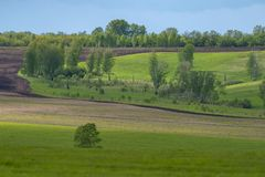 Green field under the bright sun. Summer landscape. Field with birches. Natural background Royalty Free Stock Photography