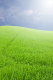 Green field under cloud blue sky. And sun Stock Photo