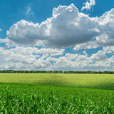 Green field under cloudy sky Stock Photo