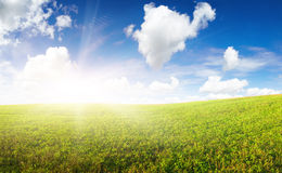 Green field under in gold sunrise beam Royalty Free Stock Photo