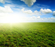Green field under midday sun. Rural scene Stock Photos