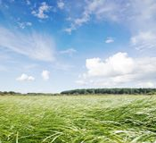 Green field under midday sun Stock Image