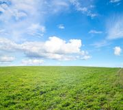 Green field under midday sun Royalty Free Stock Photography