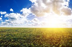 Green field under midday sun Royalty Free Stock Image