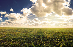 Green field under midday sun. Rural landscape Royalty Free Stock Images
