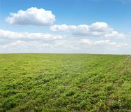 Green field under midday sun Royalty Free Stock Photo