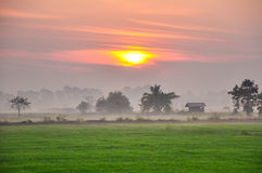 Green field under sunset sky Stock Photos