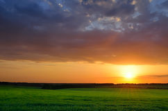 Green field under sunset sky Stock Photography